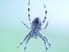 arachnophilia II